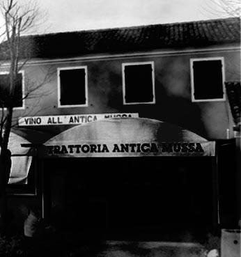 Donkey-1920-antica-mussa